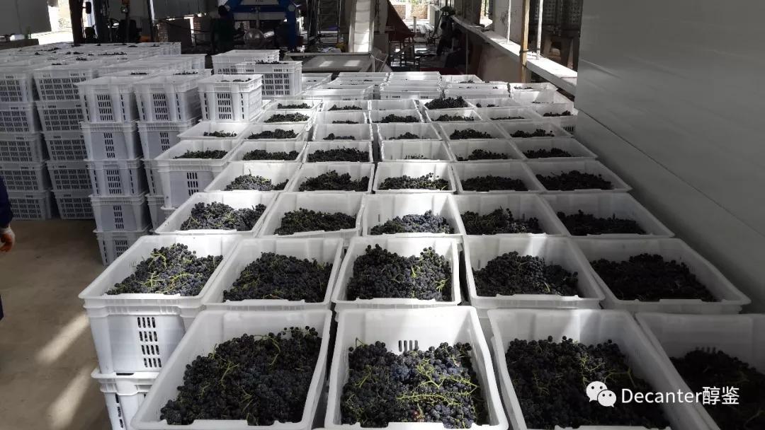 2017年中国葡萄酒产区报告(上) - 山东,河北,北京和宁夏