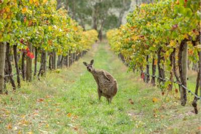 澳大利亚废止、修订葡萄酒相关法规