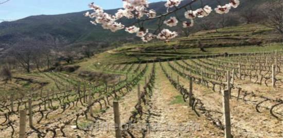 2018葡萄园报告(2)西南产区:大美香格里拉 春意盎然!