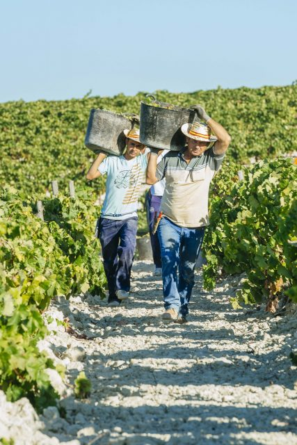 Spain Remains World's Largest Wine Exporter