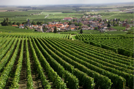 Burgundy Exports Go On Rising In 2017