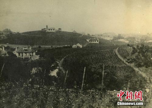 120多年前张裕曾请一位名叫西美的外国人管理葡萄园