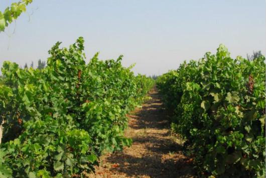 昌吉州葡萄酒产业让工业旅游魅力绽放