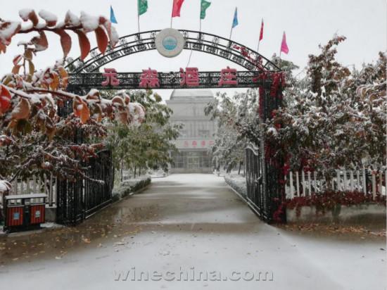 2018葡萄园报告(33)南疆产区:葡园落瑞雪 冰晶待采撷