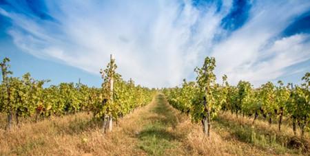 罗马尼亚葡萄酒获PDO产区认证
