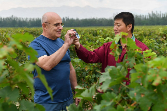 Winemaker harvesting fermented fruits of labor