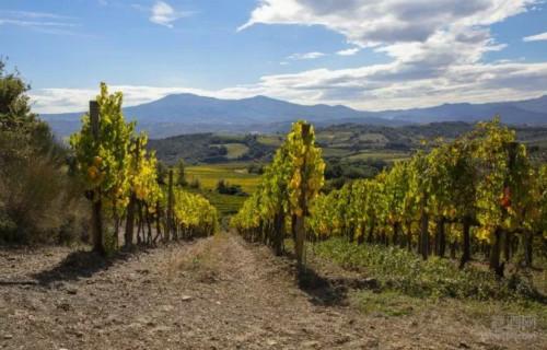 意大利 种植满六年期限才可变更葡萄园所在大区