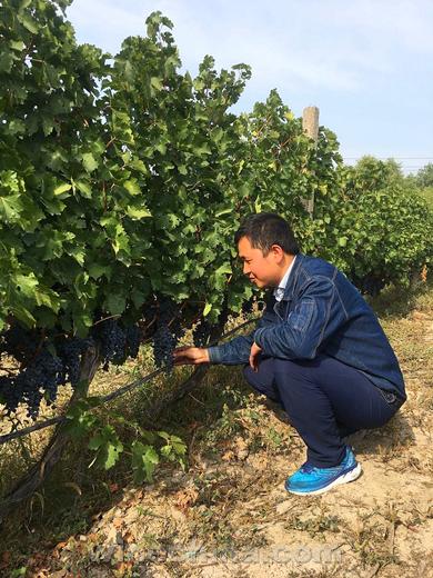 党国芳:葡萄酒浸润了我的人生!