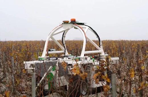高科技全面占领葡萄酒酿造,酿酒师是否会失业