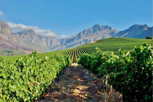 南非第三次禁酒令将导致就业机会减少并增加非法销售
