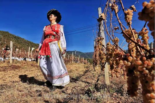 【金牌酒庄】云南帕巴拉酒庄:来自维西的高原冰酒!